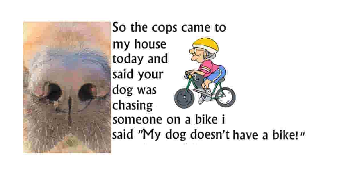 The other day, the cops came to my house and told me that my dog was chasing someone on a bike. I said that it was impossible... my dog doesn't have a bike!