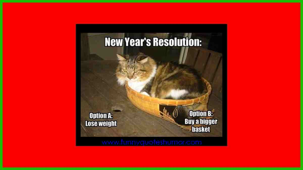 My cat's new year's resolution
